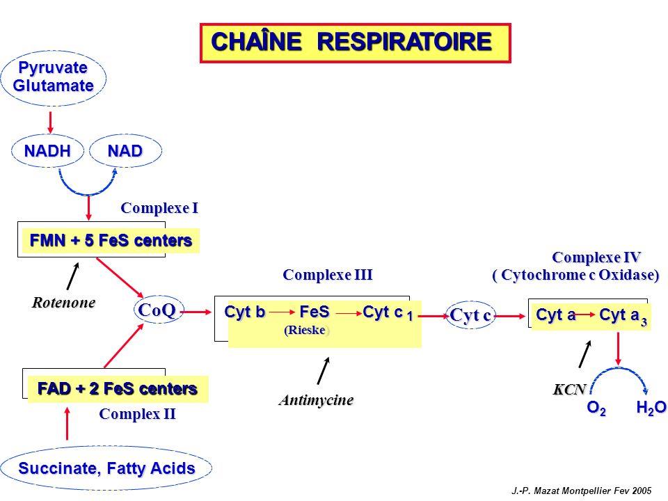 Complexe I CoQ FAD + 2 FeS centers Cyt b FeS Cyt c 1 (Rieske) Complexe III Complex II Cyt c Cyt a 3 Complexe IV ( Cytochrome c Oxidase) Rotenone Antim