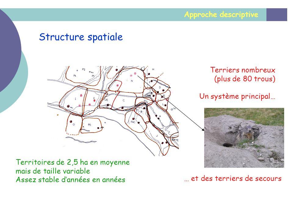 Approche descriptive Structure spatiale Territoires de 2,5 ha en moyenne mais de taille variable Assez stable dannées en années Terriers nombreux (plu
