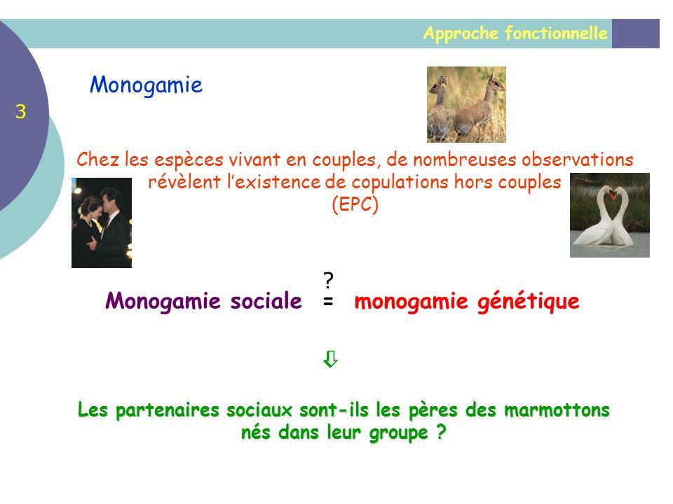 Approche fonctionnelle Monogamie Chez les espèces vivant en couples, de nombreuses observations révèlent lexistence de copulations hors couples (EPC)