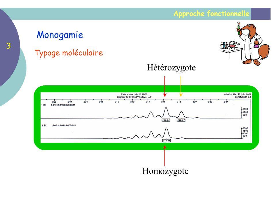 Hétérozygote Homozygote Approche fonctionnelle Monogamie Typage moléculaire 3