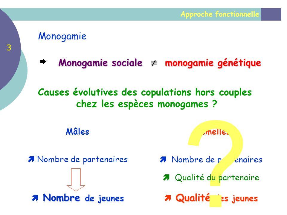 Approche fonctionnelle Monogamie Monogamie sociale monogamie génétique Causes évolutives des copulations hors couples chez les espèces monogames ? Nom