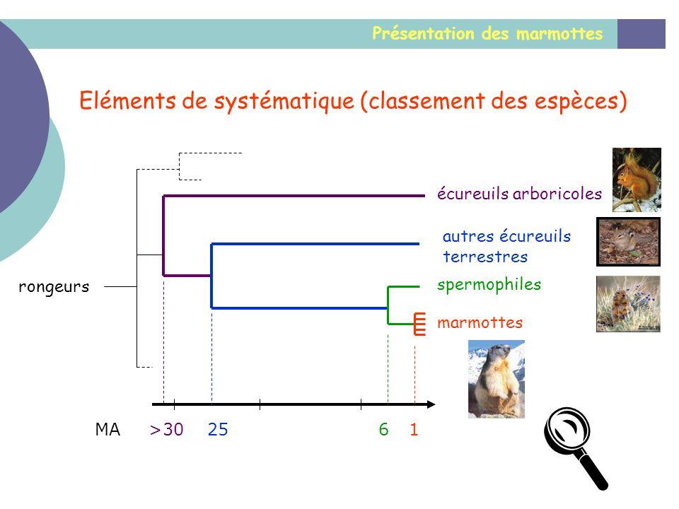 Présentation des marmottes Eléments de systématique (classement des espèces) 1625>30MA marmottes spermophiles autres écureuils terrestres écureuils ar