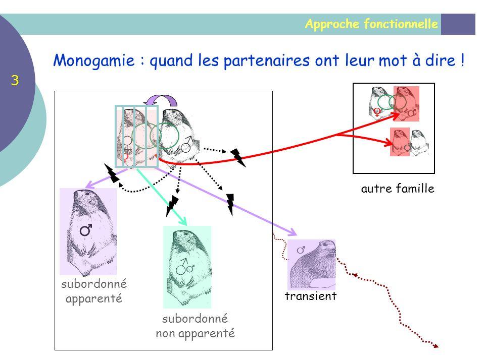 Approche fonctionnelle Monogamie : quand les partenaires ont leur mot à dire ! autre famille subordonné apparenté transient subordonné non apparenté 3