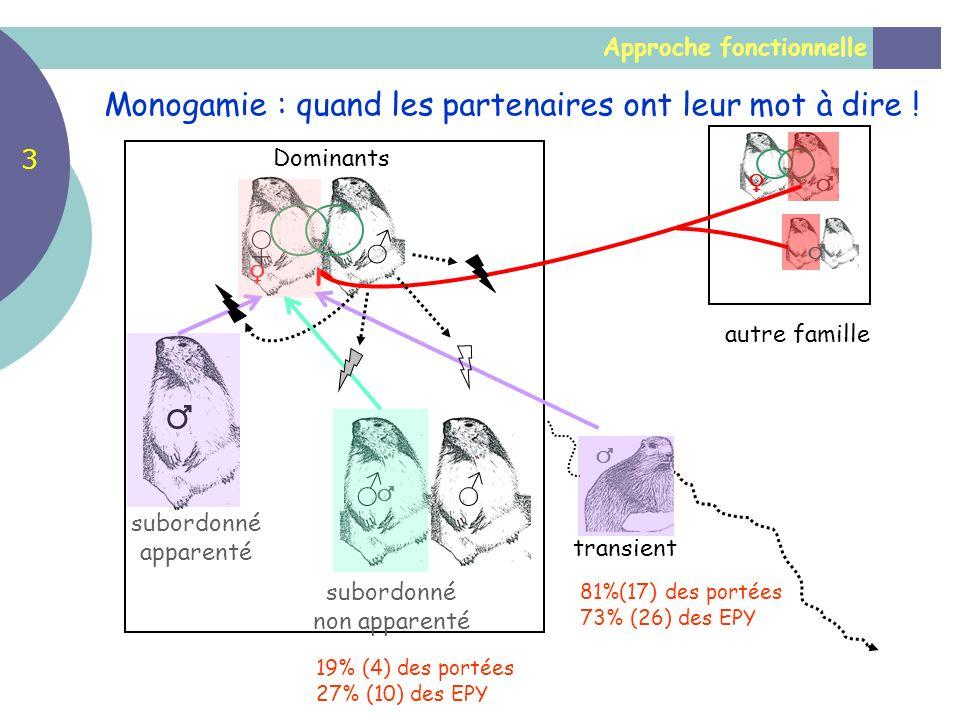 Approche fonctionnelle Monogamie : quand les partenaires ont leur mot à dire ! autre famille Dominants subordonné apparenté transient subordonné non a
