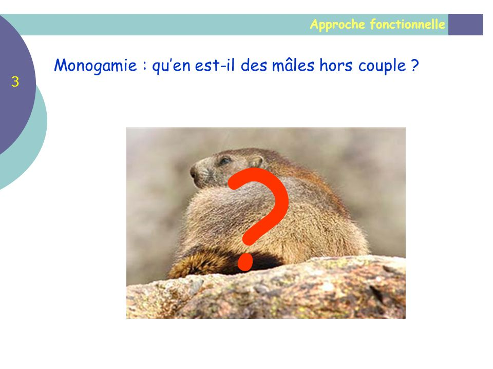 Approche fonctionnelle Monogamie : quen est-il des mâles hors couple ? ? 3