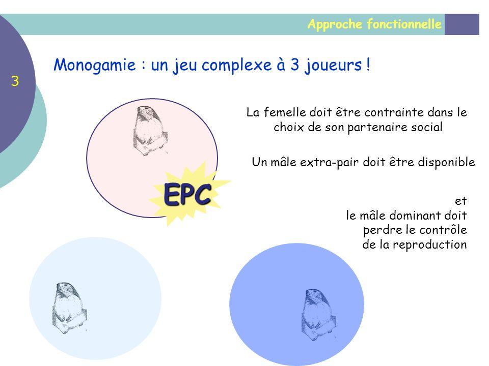 EPC La femelle doit être contrainte dans le choix de son partenaire social et le mâle dominant doit perdre le contrôle de la reproduction Un mâle extr