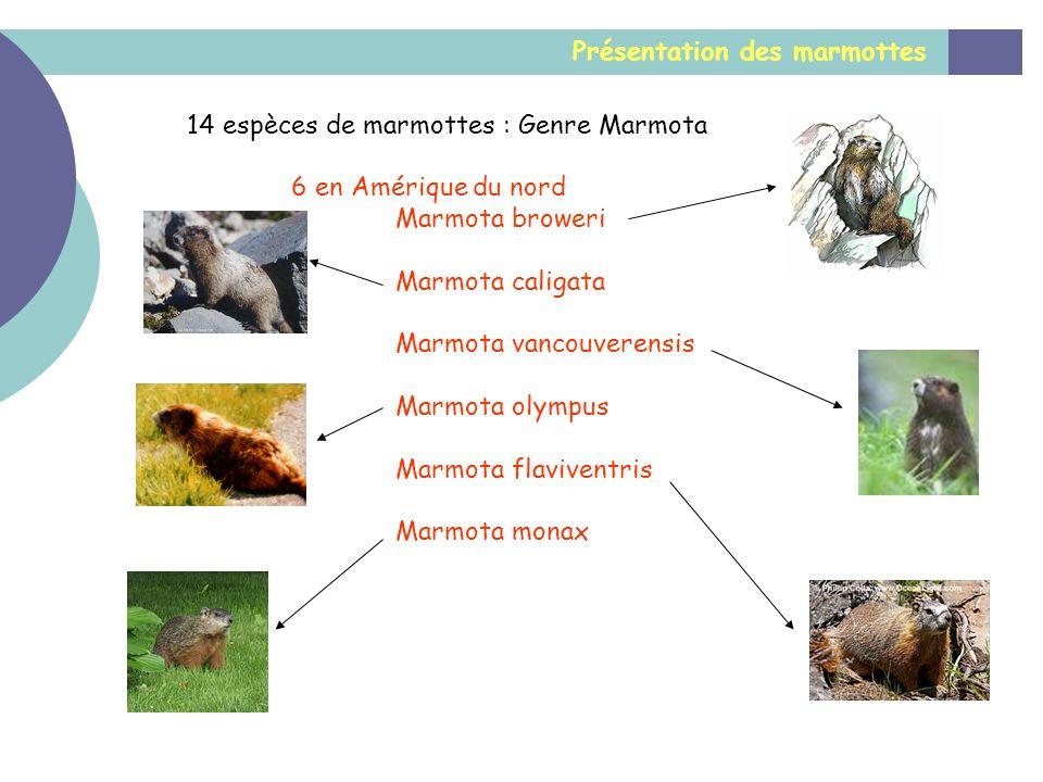 Présentation des marmottes 14 espèces de marmottes : Genre Marmota 6 en Amérique du nord Marmota broweri Marmota caligata Marmota vancouverensis Marmo