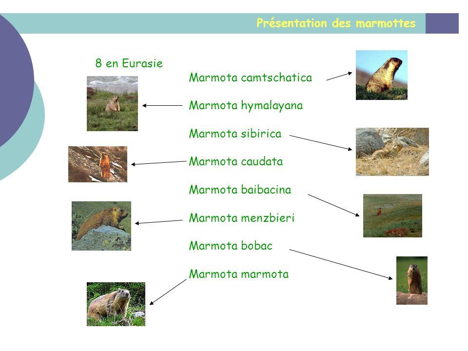 Présentation des marmottes 8 en Eurasie Marmota camtschatica Marmota hymalayana Marmota sibirica Marmota caudata Marmota baibacina Marmota menzbieri M
