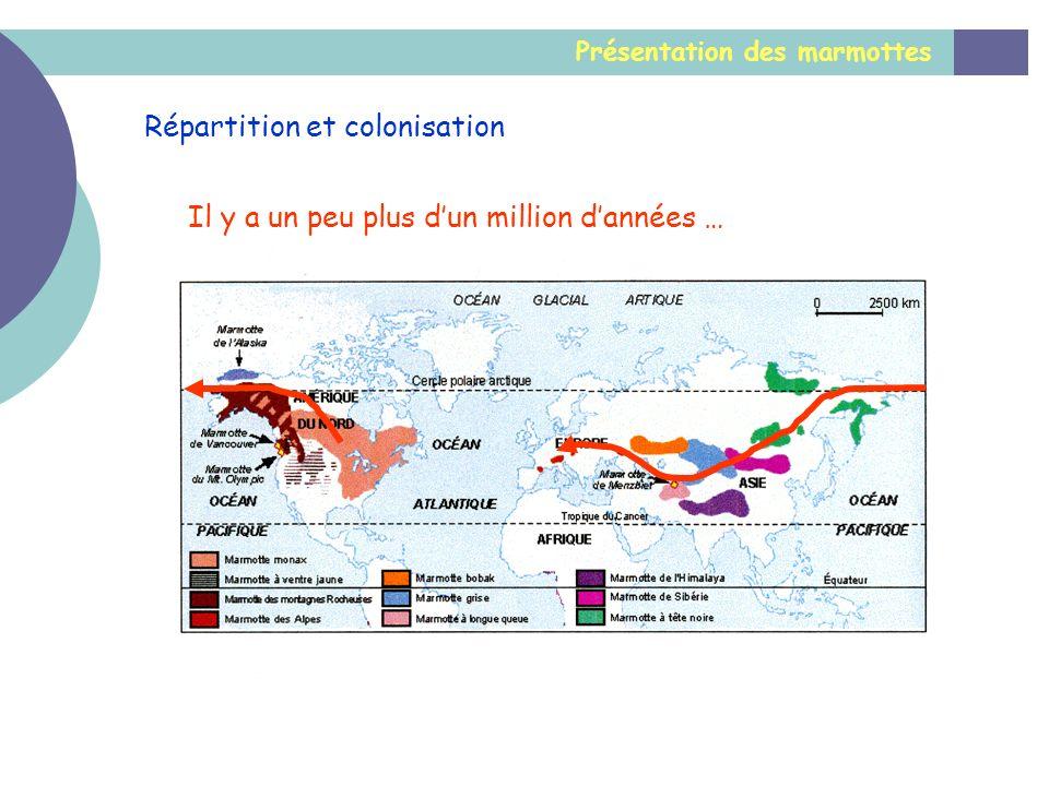 Présentation des marmottes Répartition et colonisation Il y a un peu plus dun million dannées …