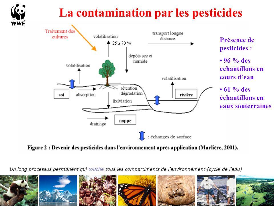 Certains pesticides saccumulent Bioaccumulation Ours polaires, alligators de Floride, poissons, bélugas … sont contaminés et disparaissent.