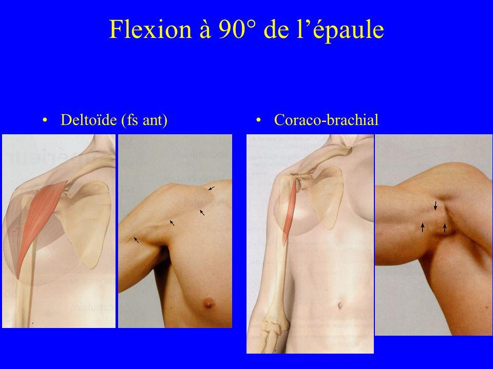Flexion à 90° de lépaule Deltoïde (fs ant)Coraco-brachial