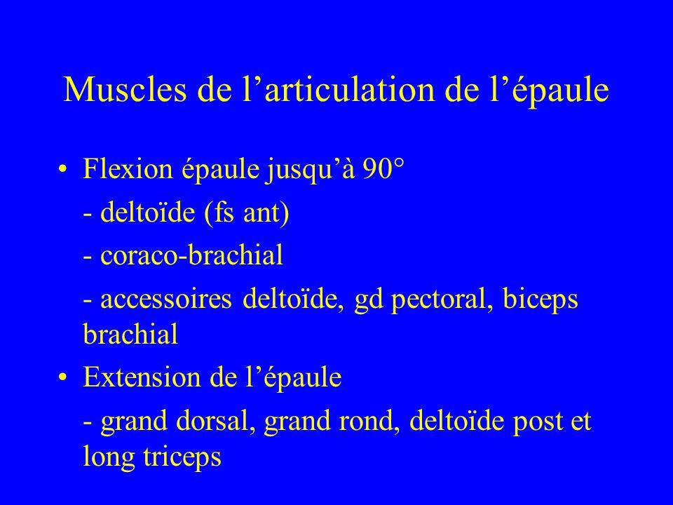 Muscles de larticulation de lépaule Flexion épaule jusquà 90° - deltoïde (fs ant) - coraco-brachial - accessoires deltoïde, gd pectoral, biceps brachi