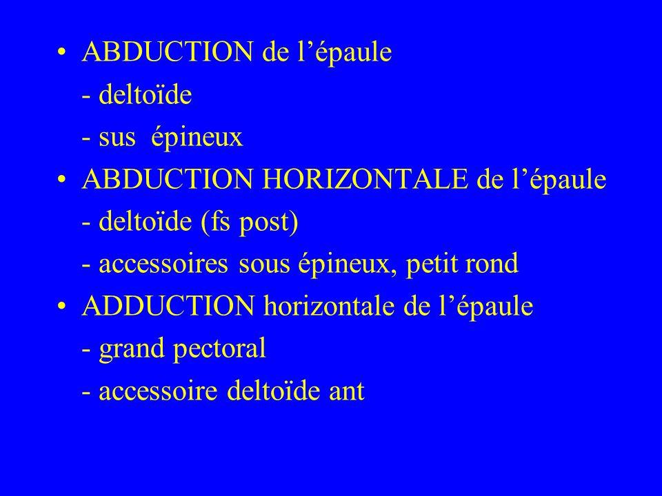 ABDUCTION de lépaule - deltoïde - sus épineux ABDUCTION HORIZONTALE de lépaule - deltoïde (fs post) - accessoires sous épineux, petit rond ADDUCTION h