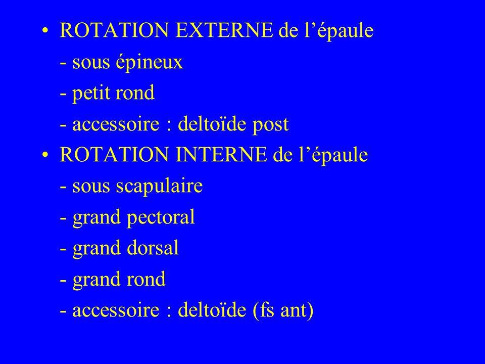 ROTATION EXTERNE de lépaule - sous épineux - petit rond - accessoire : deltoïde post ROTATION INTERNE de lépaule - sous scapulaire - grand pectoral -