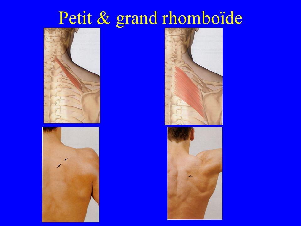 Petit & grand rhomboïde