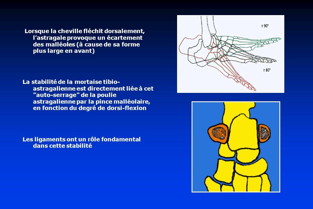 Lorsque la cheville fléchit dorsalement, lastragale provoque un écartement des malléoles (à cause de sa forme plus large en avant) La stabilité de la mortaise tibio- astragalienne est directement liée à cet auto-serrage de la poulie astragalienne par la pince malléolaire, en fonction du degré de dorsi-flexion Les ligaments ont un rôle fondamental dans cette stabilité