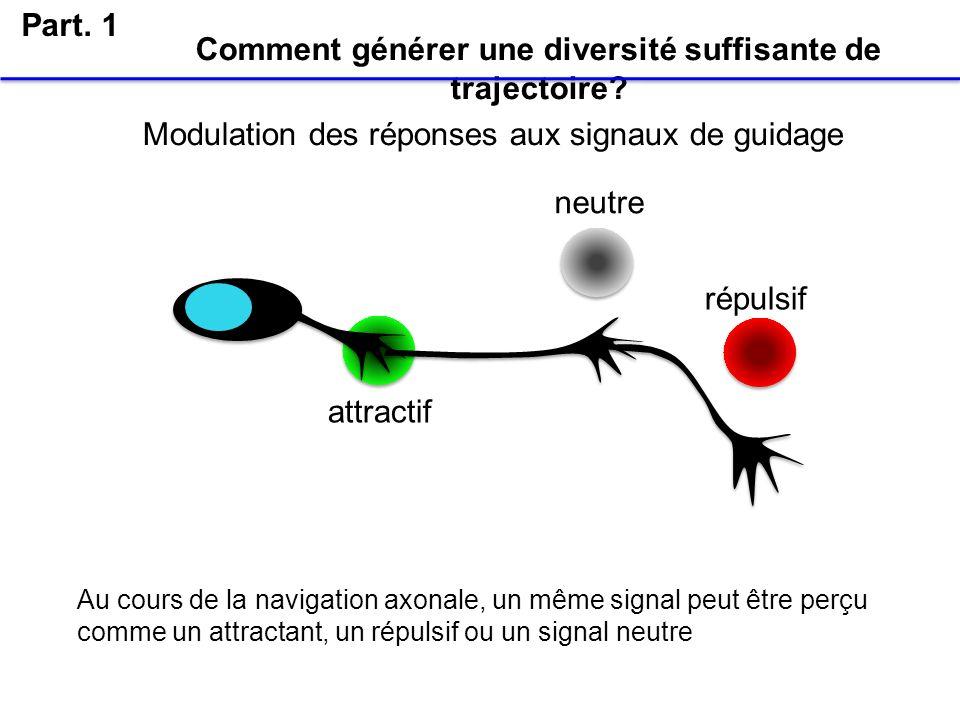Comment générer une diversité suffisante de trajectoire? Part. 1 Modulation des réponses aux signaux de guidage attractif neutre répulsif Au cours de