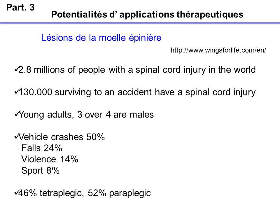 Potentialités d applications thérapeutiques Part. 3 Lésions de la moelle épinière 2.8 millions of people with a spinal cord injury in the world 130.00