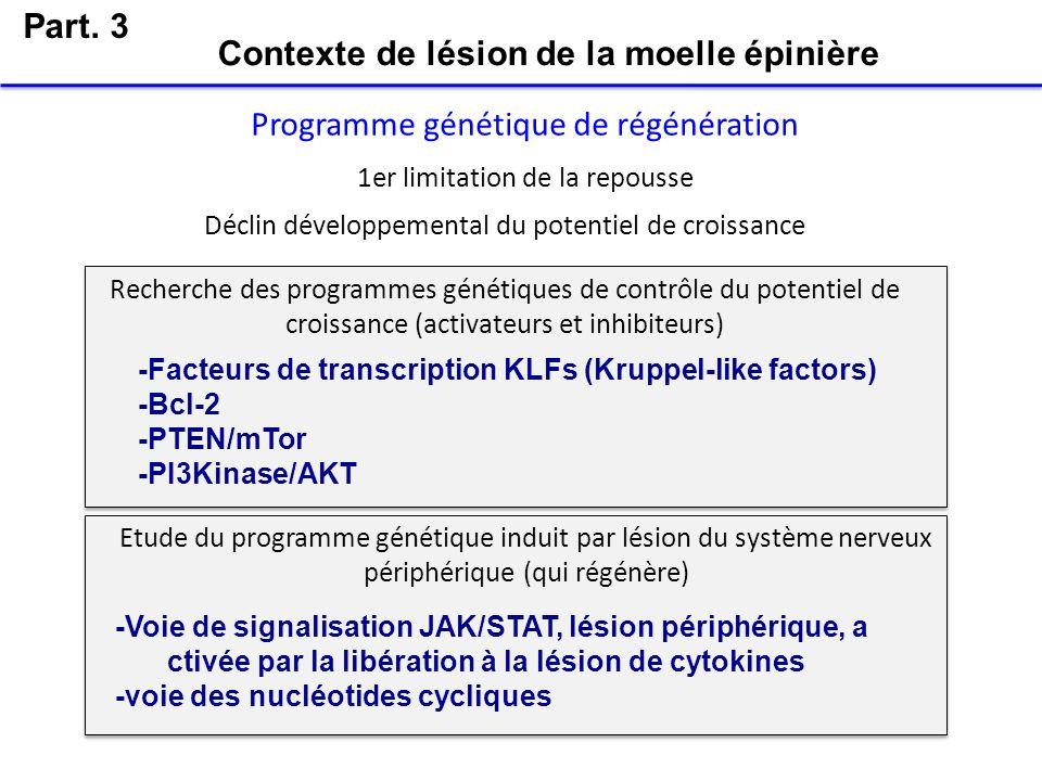 Part. 3 Programme génétique de régénération Déclin développemental du potentiel de croissance Recherche des programmes génétiques de contrôle du poten