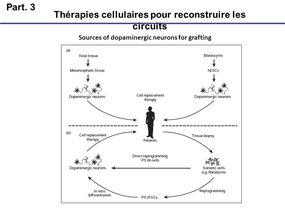 Part. 3 Thérapies cellulaires pour reconstruire les circuits Sources of dopaminergic neurons for grafting