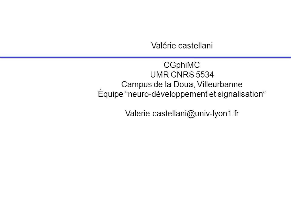 Valérie castellani CGphiMC UMR CNRS 5534 Campus de la Doua, Villeurbanne Équipe neuro-développement et signalisation Valerie.castellani@univ-lyon1.fr