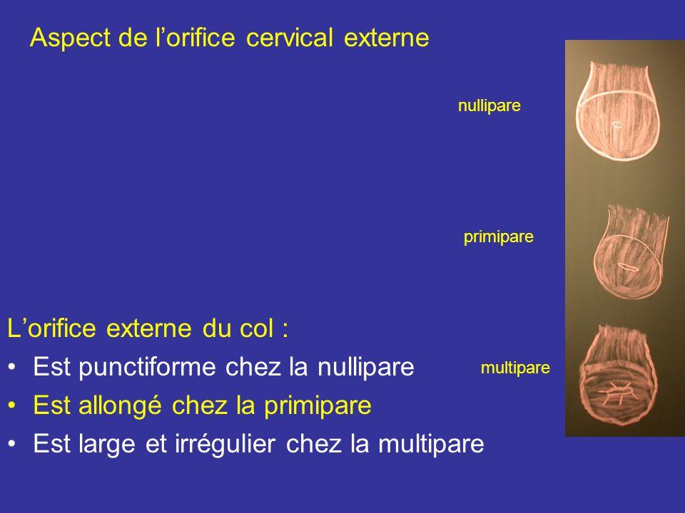 2 La partie supra- vaginale se continue avec le corps 3 La partie vaginale est rose pâle et percées à son sommet dun orifice : lorifice externe du col