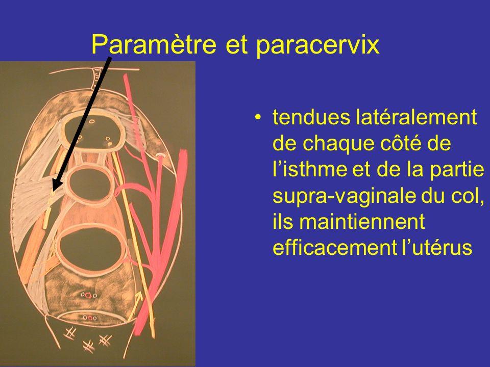 Ligaments vésico-utérins Sont ténus et constitués de fibres Mm lisses tendues entre vessies et isthme utérins