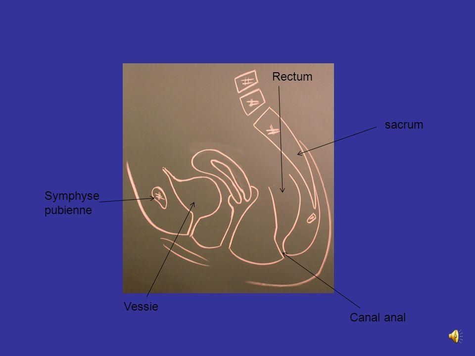 Situation direction Situé entre vessie en Av et rectum en Arr Fait sailli dans le vagin ovaire trompe Rectum Coupe sagittal chez la femme version flex