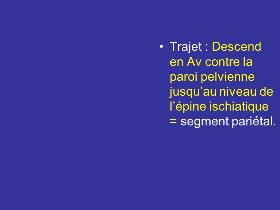 Vascularisation : artère utérine Très flexueuse L 13- 15 cm Origine : nait de lart Iliaque Interne isolément ou par un tronc commun avec lart ombilica