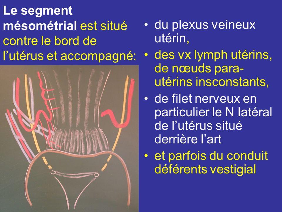 Le segment paramétrial est croisé en Arr par luretère. –Ce croisement se situe environ à 20 mm de listhme et à 15 mm du fornix vaginal. –Il est entour