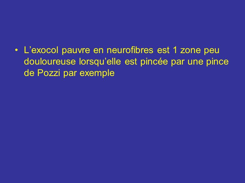 Innervation Les N utérins peuvent être groupés en 2 pédicules : le pédicule cervico- isthmique constitué de 4-5 N se détache de la partie antéro-sup d