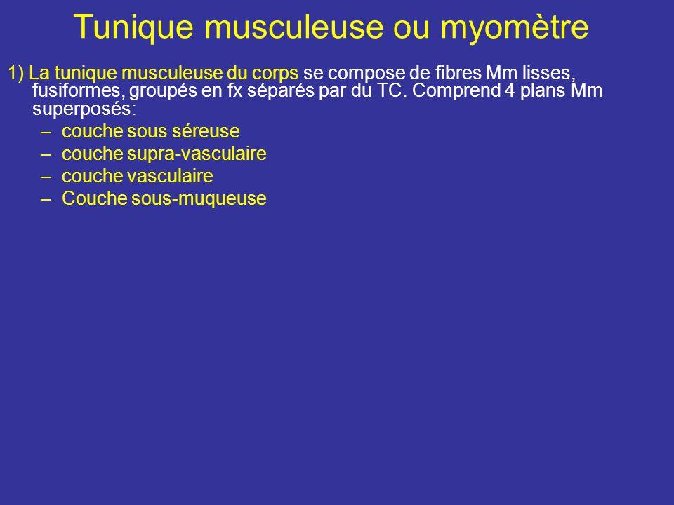 Tunique externe La tunique séreuse ou périmétrium est constitué par la séreuse péritonéale qui recouvre le fundus et les faces vésicales et intestinal