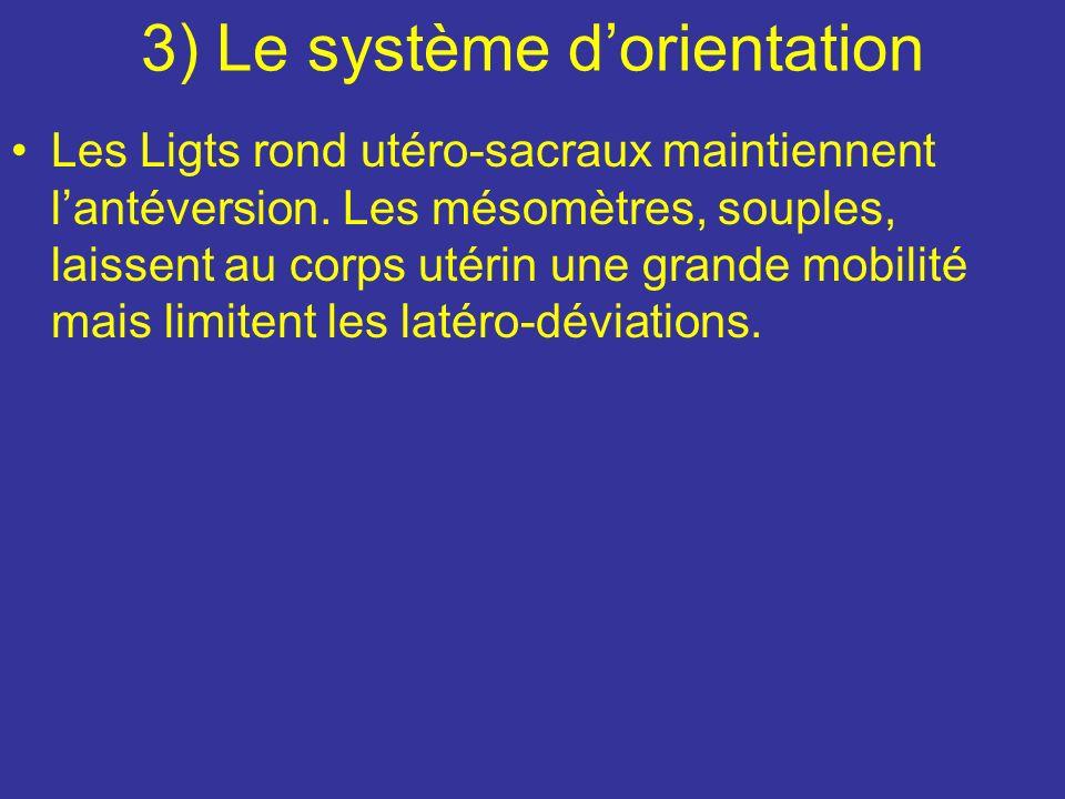 2) Le système de suspension Lutérus et suspendu à peu près dans la position dun individu qui fait des barres parallèles. Entre les barres pend le col