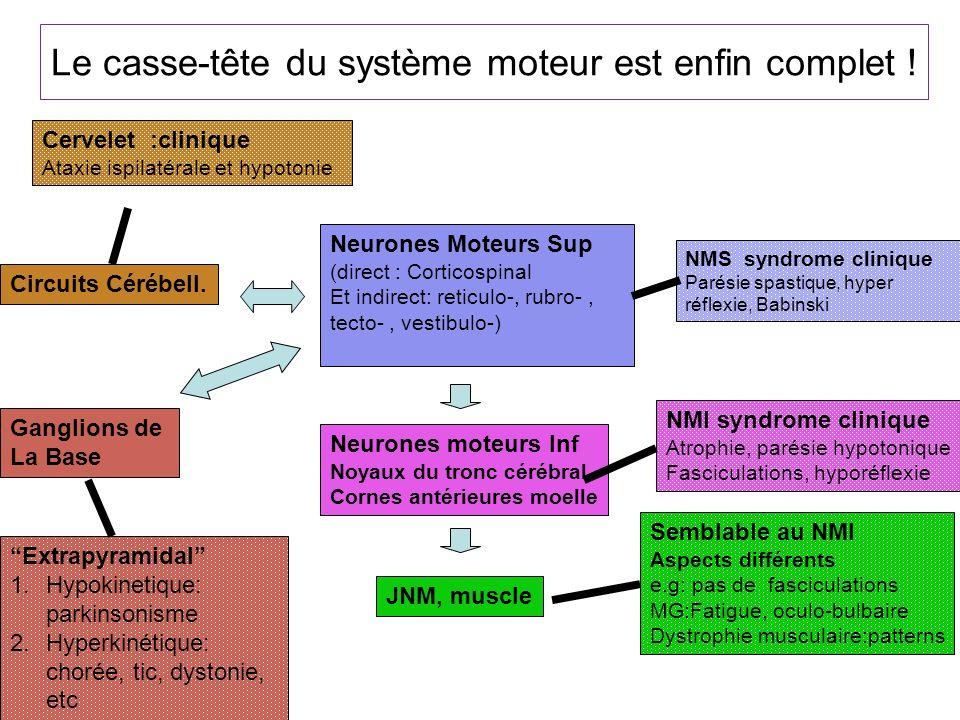 Le casse-tête du système moteur est enfin complet ! Neurones Moteurs Sup (direct : Corticospinal Et indirect: reticulo-, rubro-, tecto-, vestibulo-) N