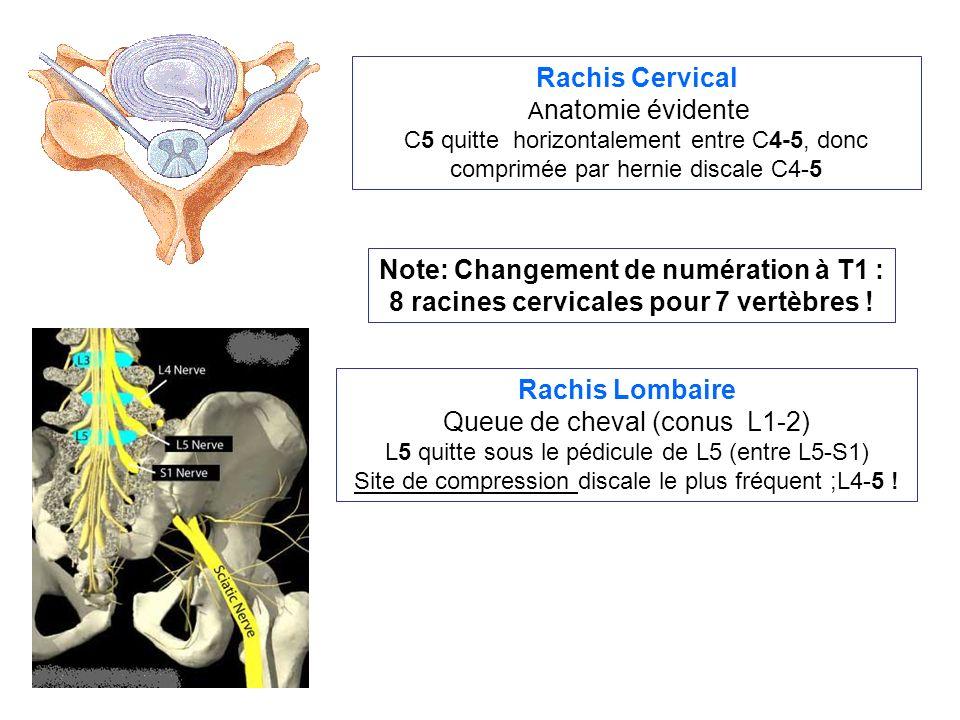 Rachis Lombaire Queue de cheval (conus L1-2) L5 quitte sous le pédicule de L5 (entre L5-S1) Site de compression discale le plus fréquent ;L4-5 .