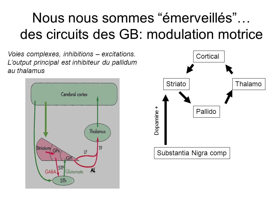 Nous nous sommes émerveillés… des circuits des GB: modulation motrice Thalamo Cortical Striato Pallido Substantia Nigra comp Dopamine + Voies complexes, inhibitions – excitations.