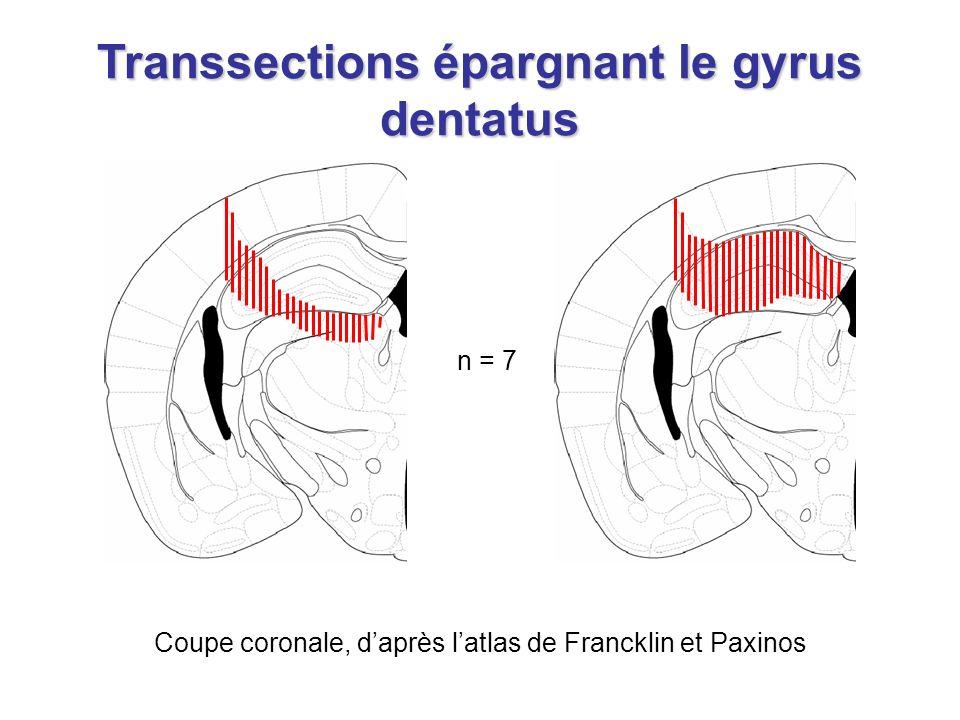 Coupe coronale, daprès latlas de Francklin et Paxinos n = 7