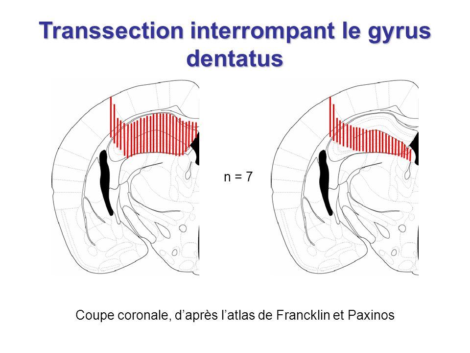 n = 7 Coupe coronale, daprès latlas de Francklin et Paxinos