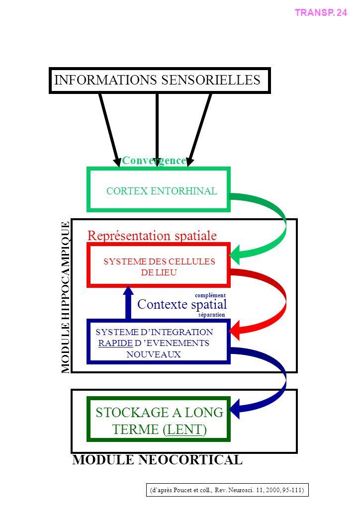 SYSTEME DES CELLULES DE LIEU SYSTEME DINTEGRATION RAPIDE D EVENEMENTS NOUVEAUX STOCKAGE A LONG TERME (LENT) CORTEX ENTORHINAL INFORMATIONS SENSORIELLES (daprès Poucet et coll., Rev.