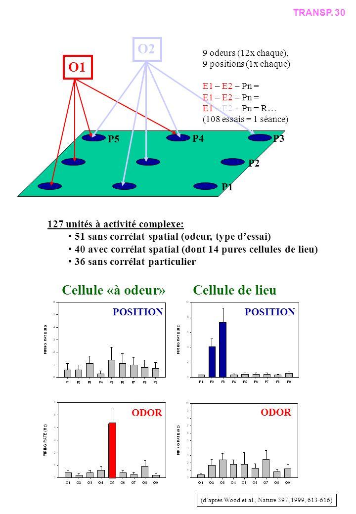 POSITION ODOR Cellule «à odeur»Cellule de lieu (daprès Wood et al., Nature 397, 1999, 613-616) O1 O2 P3 P2 P4 127 unités à activité complexe: 51 sans corrélat spatial (odeur, type dessai) 40 avec corrélat spatial (dont 14 pures cellules de lieu) 36 sans corrélat particulier P1 P5 TRANSP.