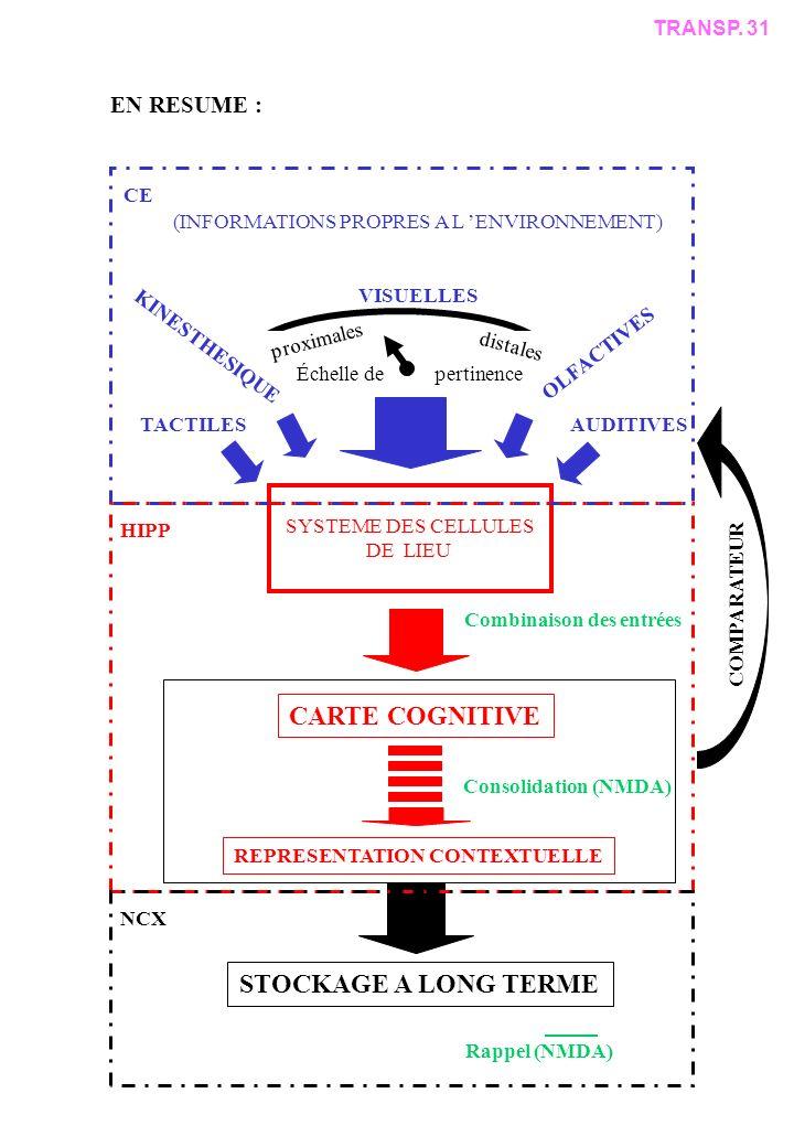 (INFORMATIONS PROPRES A L ENVIRONNEMENT) VISUELLES Échelle de pertinence proximales distales OLFACTIVES AUDITIVES KINESTHESIQUE TACTILES SYSTEME DES CELLULES DE LIEU CARTE COGNITIVE REPRESENTATION CONTEXTUELLE COMPARATEUR STOCKAGE A LONG TERME Consolidation (NMDA) Rappel (NMDA) CE HIPP NCX Combinaison des entrées TRANSP.
