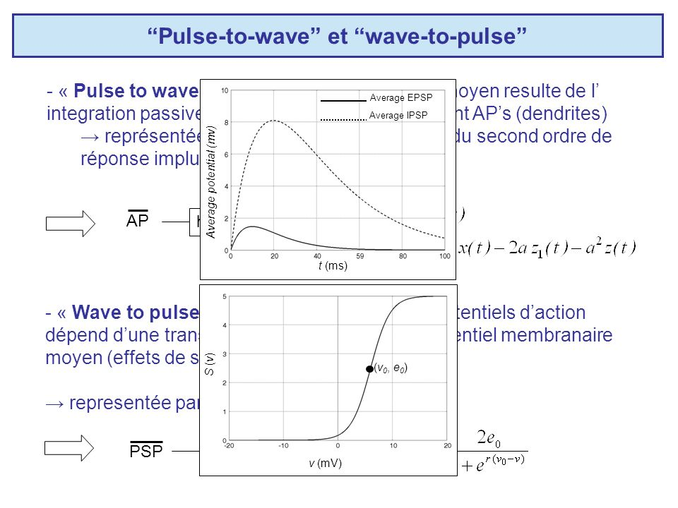Pulse-to-wave et wave-to-pulse - « Pulse to wave » : le potential membranaire moyen resulte de l integration passive des PPSs liés aux PAs afferent AP