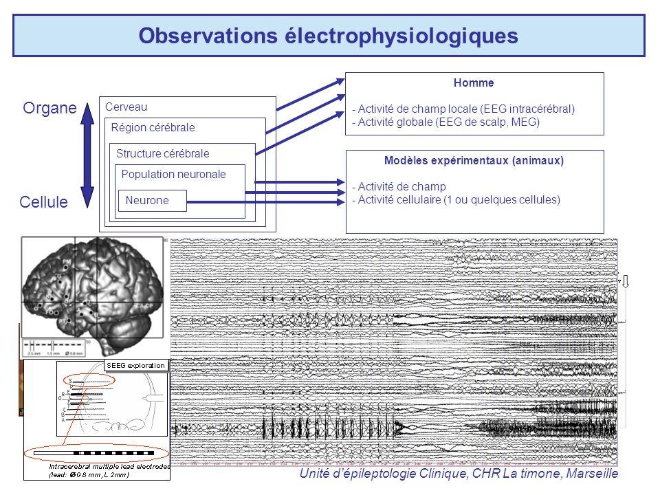 Observations électrophysiologiques Neurone Population neuronale Structure cérébrale Région cérébrale Cerveau Cellule Organe Modèles expérimentaux (animaux) - Activité de champ - Activité cellulaire (1 ou quelques cellules) Institut Neurologique Carlo Besta, Milan Cerveau isolé Homme - Activité de champ locale (EEG intracérébral) - Activité globale (EEG de scalp, MEG) Unité dépileptologie Clinique, CHR La timone, Marseille