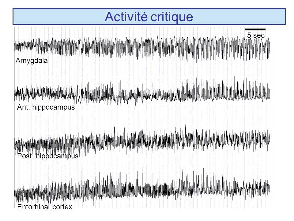 Amygdala Ant. hippocampus Post. hippocampus Entorhinal cortex Activité critique 5 sec