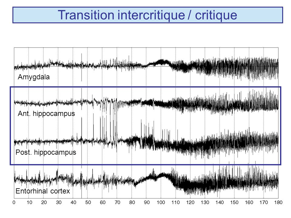Transition intercritique / critique Ant. hippocampus Post. hippocampus Amygdala Entorhinal cortex