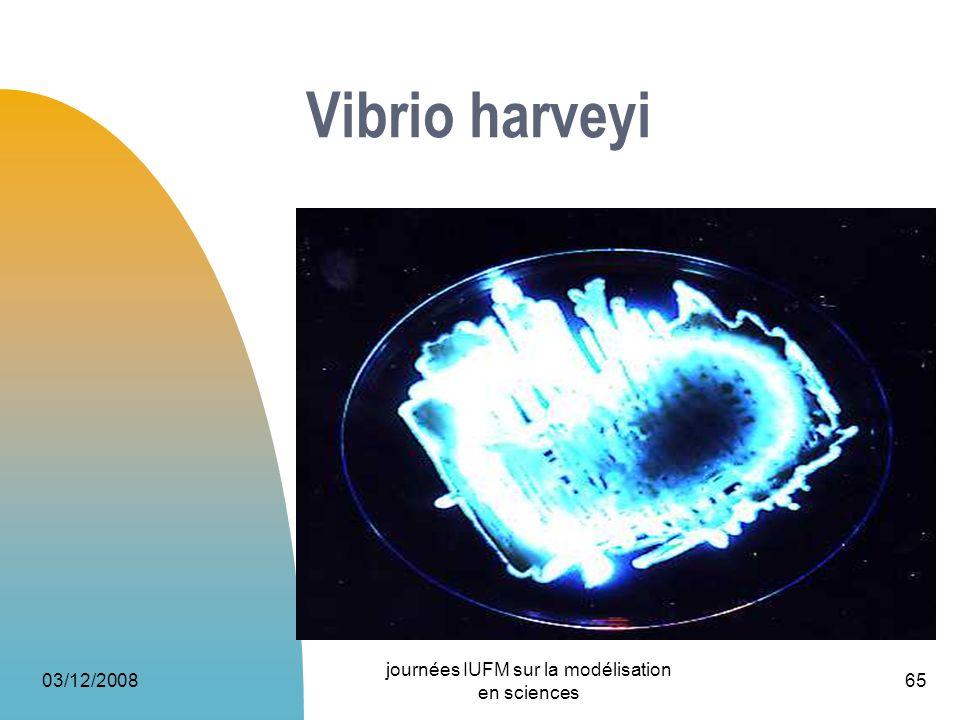 03/12/2008 journées IUFM sur la modélisation en sciences 65 Vibrio harveyi