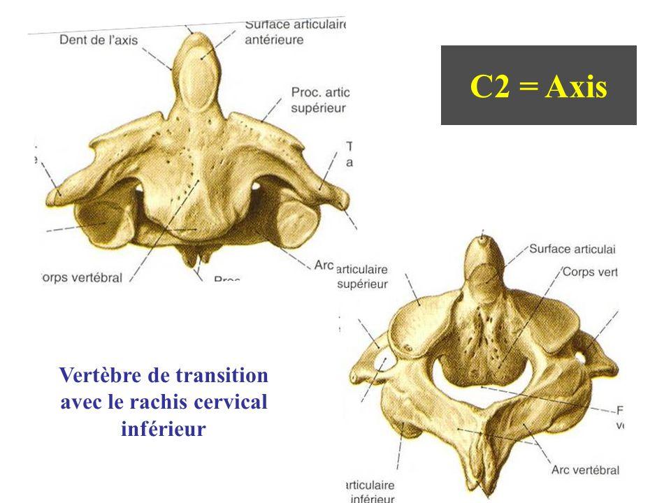 C2 = Axis Vertèbre de transition avec le rachis cervical inférieur