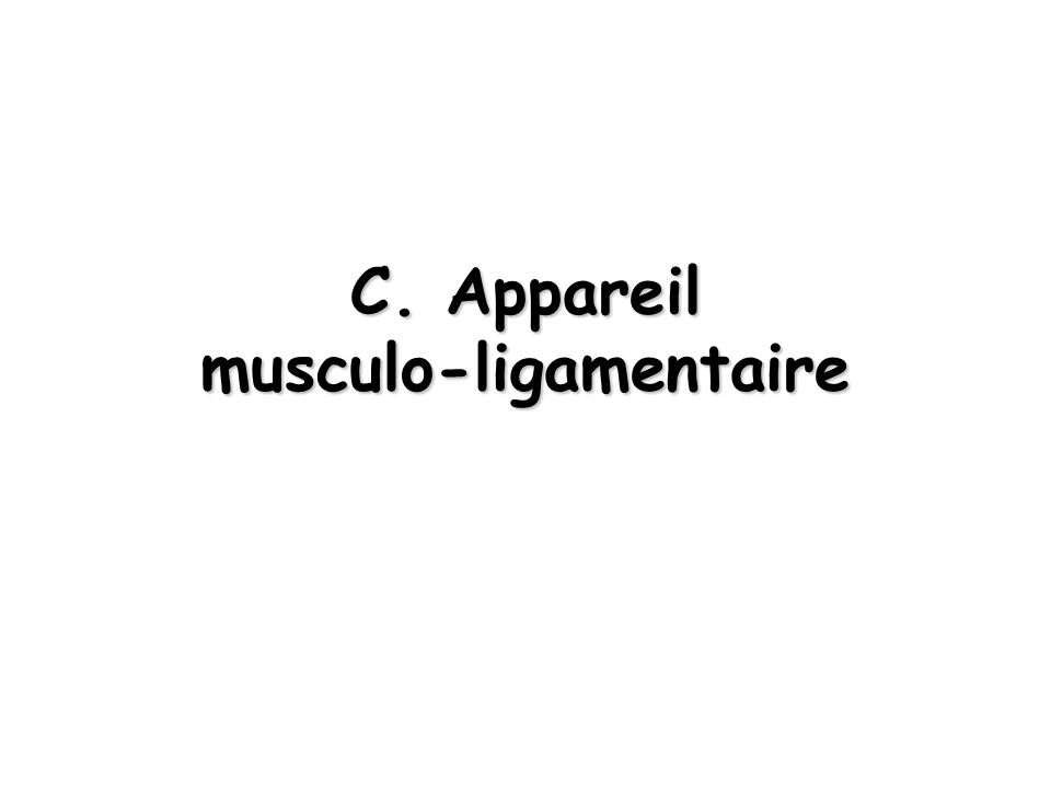 C. Appareil musculo-ligamentaire