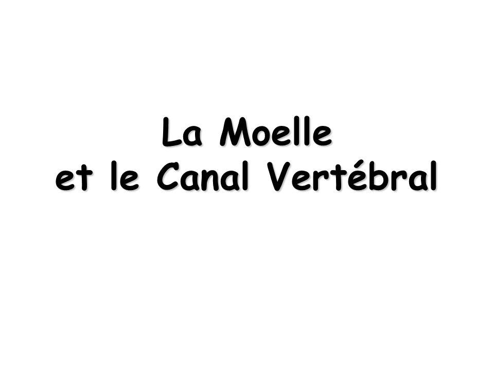 La Moelle et le Canal Vertébral