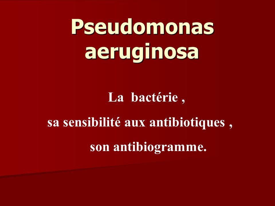 Pseudomonas aeruginosa La bactérie, sa sensibilité aux antibiotiques, son antibiogramme.